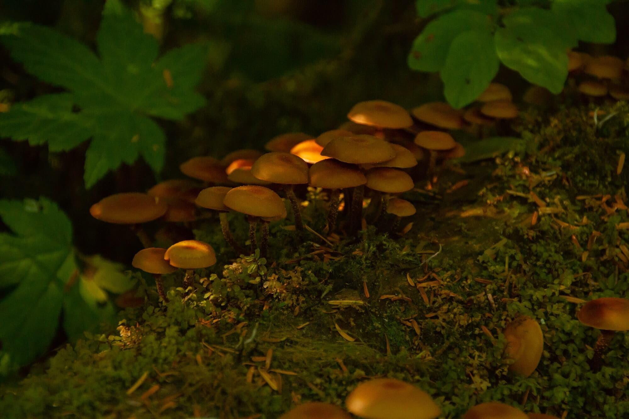 https://www.kawanti.com/wp-content/uploads/2018/10/ARS-Fungi.jpg